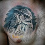 татуировка совы / owl tatto